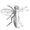 Aktogen logo